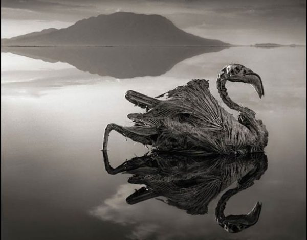 Misteriosul lac care pietrifică orice vietate